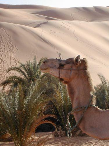 Libia2003_4 - 17