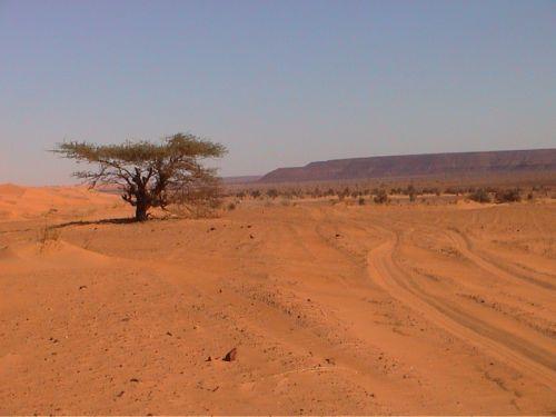 Mauritania_Adrar - 48