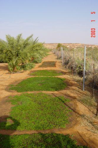 Mauritania_HodhElGharbi - 02