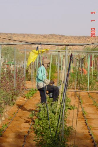 Mauritania_HodhElGharbi - 03