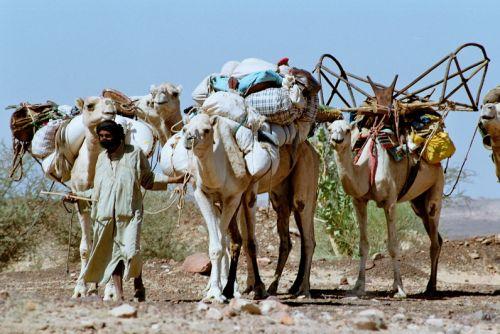 Mauritania_HodhElGharbi - 12