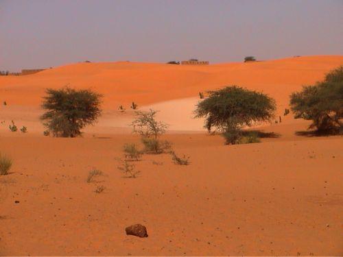 Mauritania_HodhElGharbi - 21