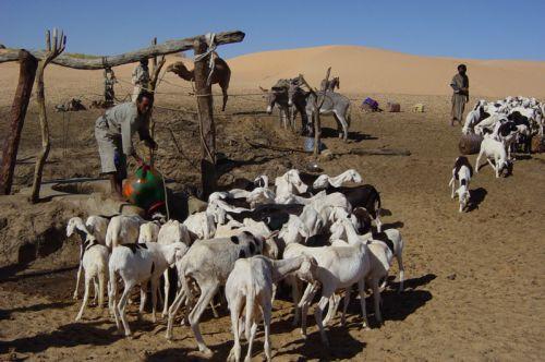 Mauritania_HodhElGharbi - 44