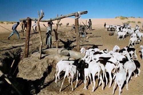 Mauritania_HodhElGharbi - 45