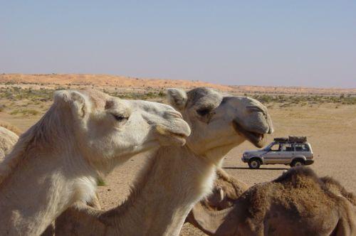 Mauritania_HodhElGharbi - 47