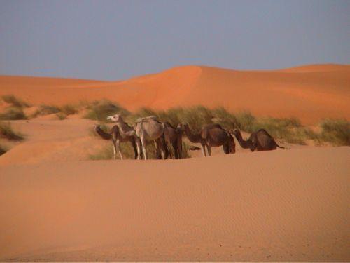 Mauritania_HodhElGharbi - 49