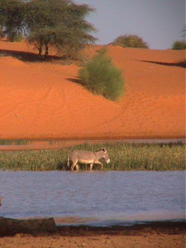 Mauritania_Tagant 2 - 15