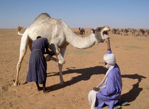Tunisi-Agadez2 - 11