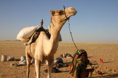 Tunisi-Agadez5 - 04
