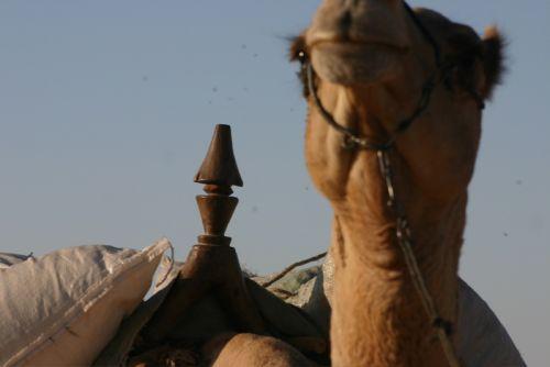 Tunisi-Agadez5 - 05